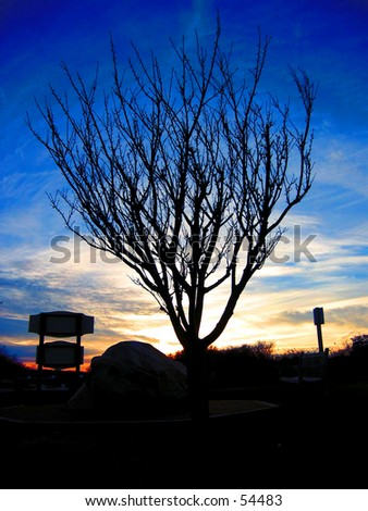 Tree of Birth (Dawn) - stock photo