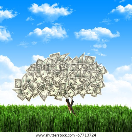 Tree of dollar bills on the green grass against the blue sky. Concept. - stock photo