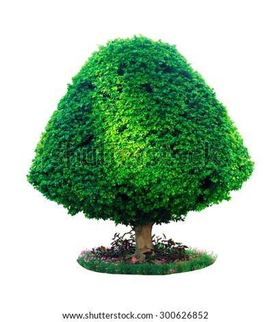 Tree of landscape design. isolated - stock photo