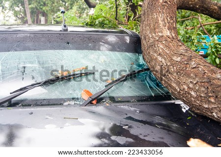 tree on a car after hurricane (damaged car) - stock photo