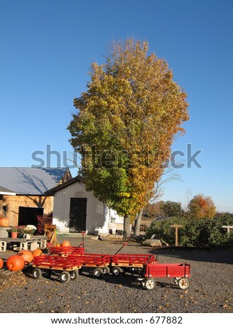 Tree on a fall day at a New England farmstand - stock photo