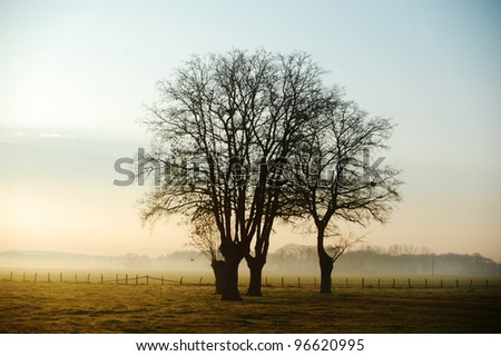 tree on a field in the morning - stock photo