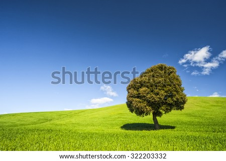 Tree on a green grass and blue sky