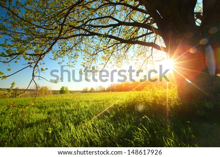 Tree on a green meadow at sunset - stock photo