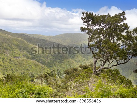 tree on a mountain slope, Mauritius  island, Africa. - stock photo
