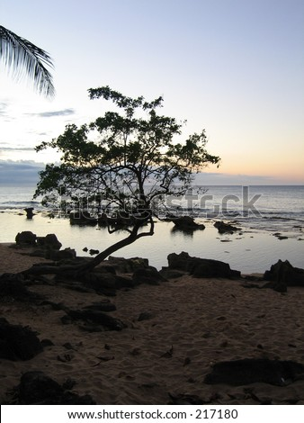 Tree on a Puerto Rican Beach