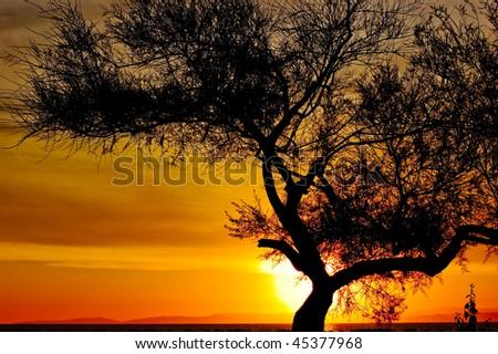 Tree on a sunset - stock photo