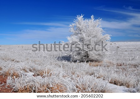 Tree on a vast meadow in a winter landscape. - stock photo