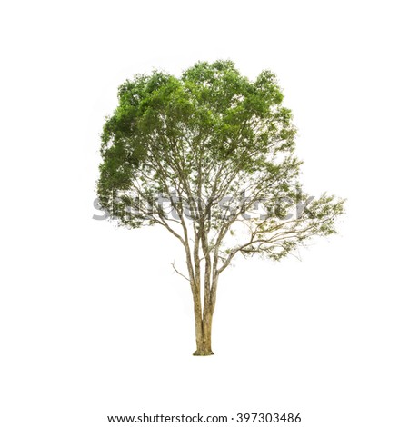 Tree on a white background - stock photo