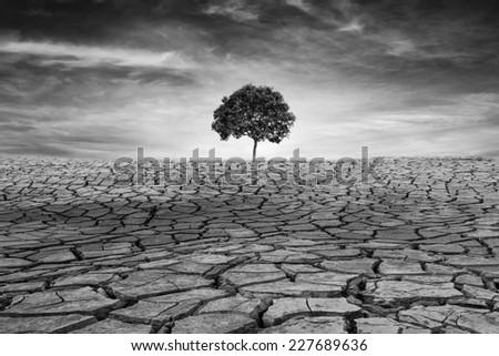 Tree on drought cracked desert landscape, Black & White - stock photo