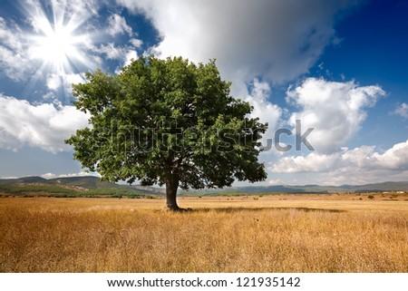 Tree on field - stock photo