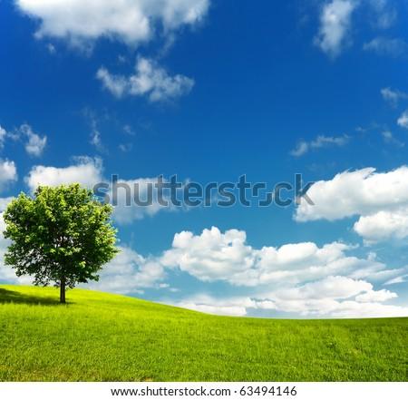 Tree on green field - stock photo