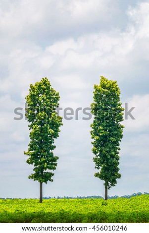 Tree on green meadow and clear sky background