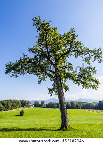 Tree on green meadow in a typical landscape of Bavarian alps - stock photo