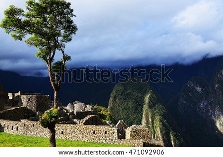 Tree on Machu Picchu