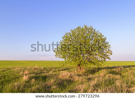 tree on meadow. - stock photo