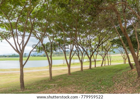 Shady stock images royalty free images vectors shutterstock - Trees for shade in small spaces concept ...