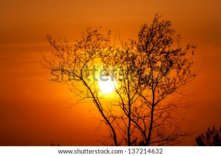 Tree on red sunset background