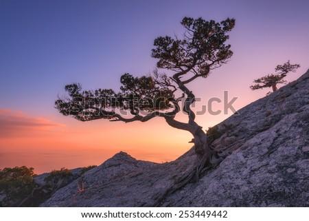 Tree on rock in Crimea - stock photo