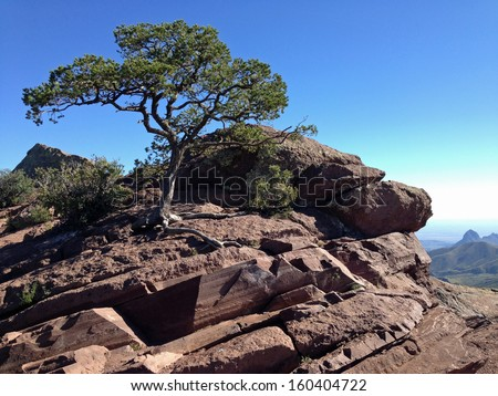 Tree on rocks in Big Bend National Park, Texas - stock photo