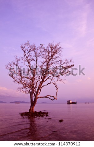 Tree on sea and sunset