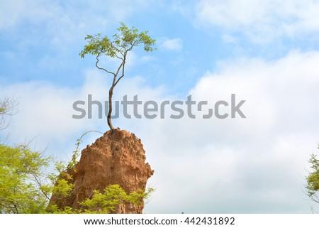 Tree on soil erosion pillar at Sao Din Na Noi in Nan province, Thailand - stock photo