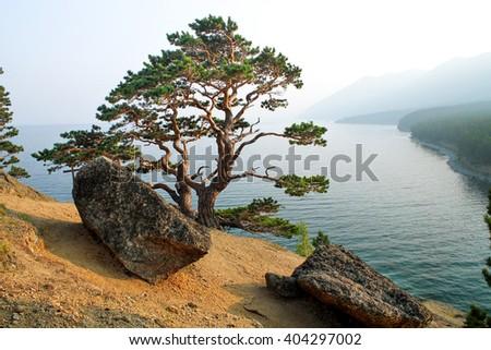 Tree on the coast of Lake Baikal - stock photo