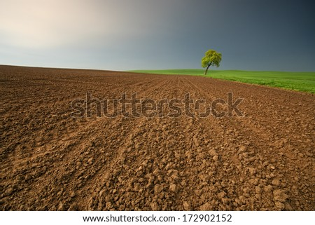 Tree on the field in spring before the rain - stock photo