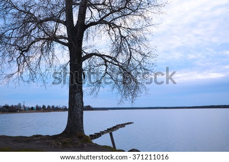 Tree on the lake in autumn