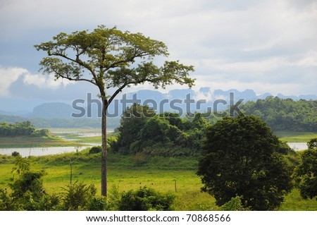 tree on the lake with mist and mountain in the background. - stock photo