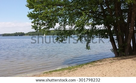 Tree on the shores of lake