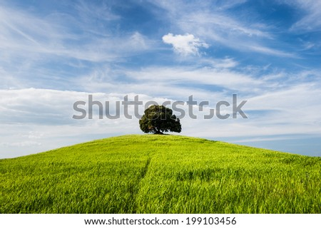 Tree on the top of small green hill with blue sky - stock photo
