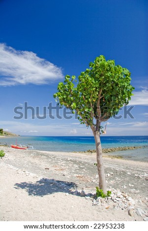 Tree on the tropical beach. Pemuteran beach on Bali island. Indonesia