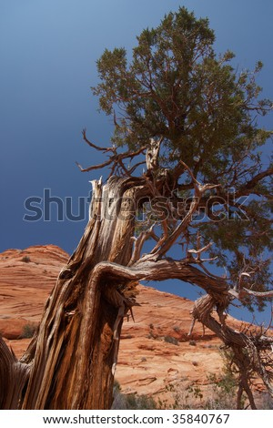 Tree on the way to The Wave - stock photo