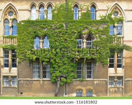 Tree on wall of The Meadow Building, Christ Church college in Oxford, United Kingdom. - stock photo