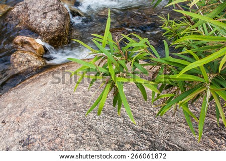 tree on water and rock  - stock photo