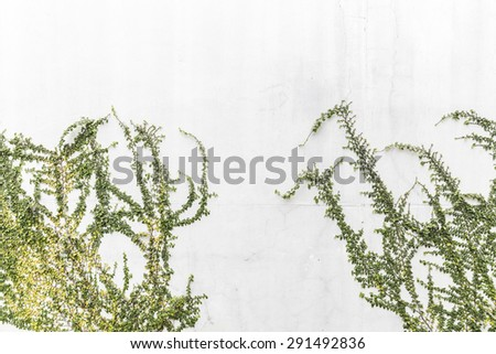 Tree on white concrete wall - stock photo
