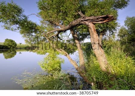 Tree over the lake - stock photo
