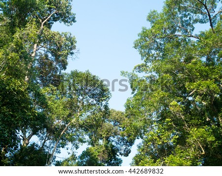 Tree. Perspective unique nature green leave view from under big green tree. Natural and environment concept. - stock photo
