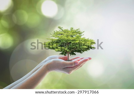 Tree planing on female human hands with blurred natural green leaves bokeh background with light flare: Human hands holding big tree: Environment and ecosystem preservation creative concept/ idea - stock photo