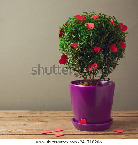 Tree plant with heart shapes. Valentine's day concept - stock photo