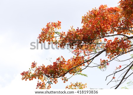 tree red flower