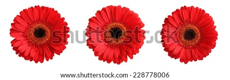 Tree red gerberas isolated on white background