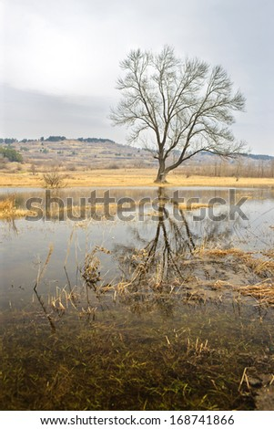 tree reflection - stock photo