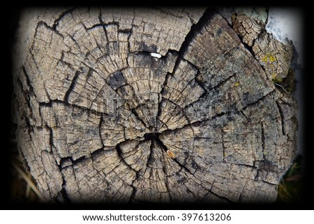 Tree rings old weathered wood texture with the cross section of a cut log showing the concentric annual growth rings as a flat nature background and conservation concept of forestry and aging. - stock photo