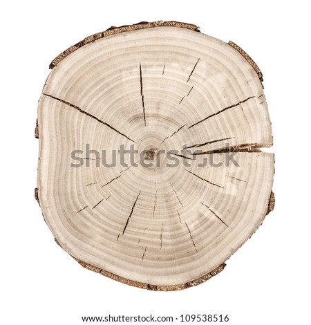 Tree rings. Wooden background - stock photo