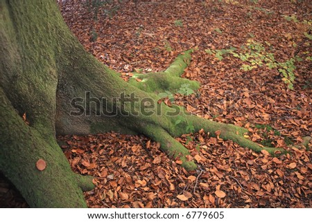 Tree root and Autumn leaves. - stock photo
