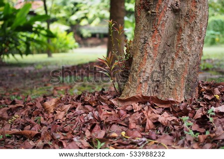 Tree root covered by brown dried leaves in the park.