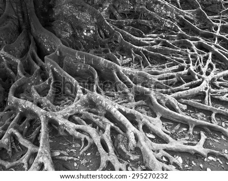tree root texture in black and white - stock photo