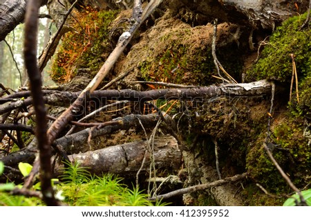 tree root toppled over